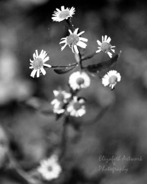 Black and White Sunday