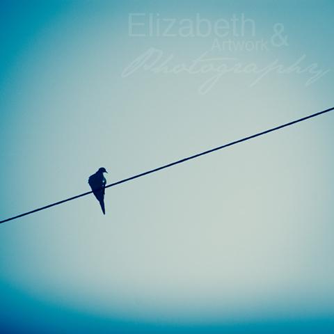BirdOnWireProof