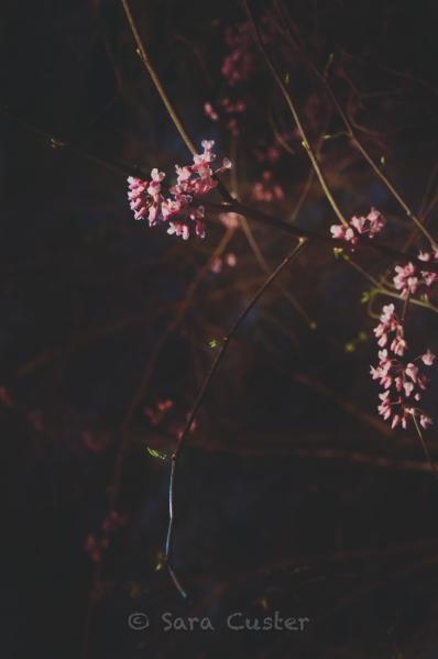 NightPhoto-1